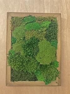 Sat Oct 16 Moss Frame